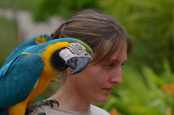 La jeune fille au perroquet