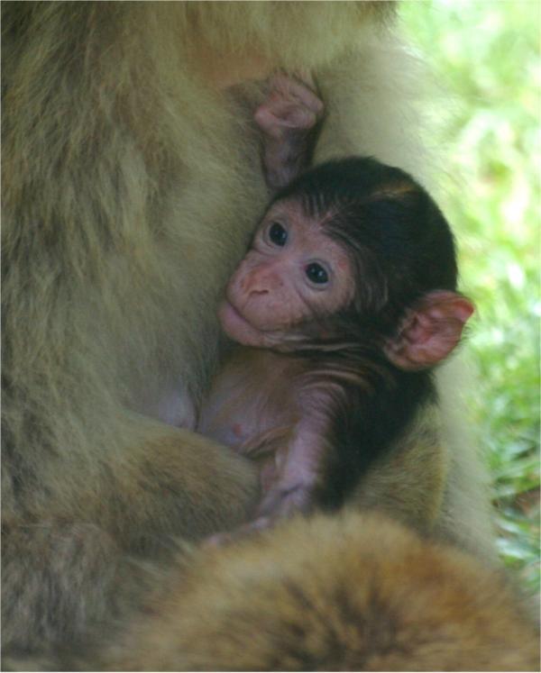 Réconfort maternel