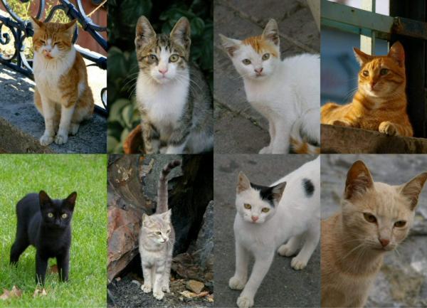 Aimez-vous les chats ?