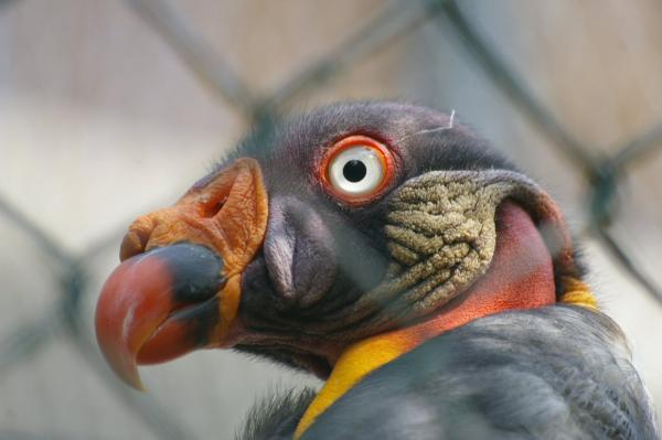 Étranges oiseaux (2)