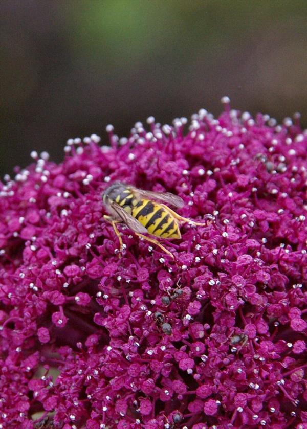 La guêpe et les fourmis