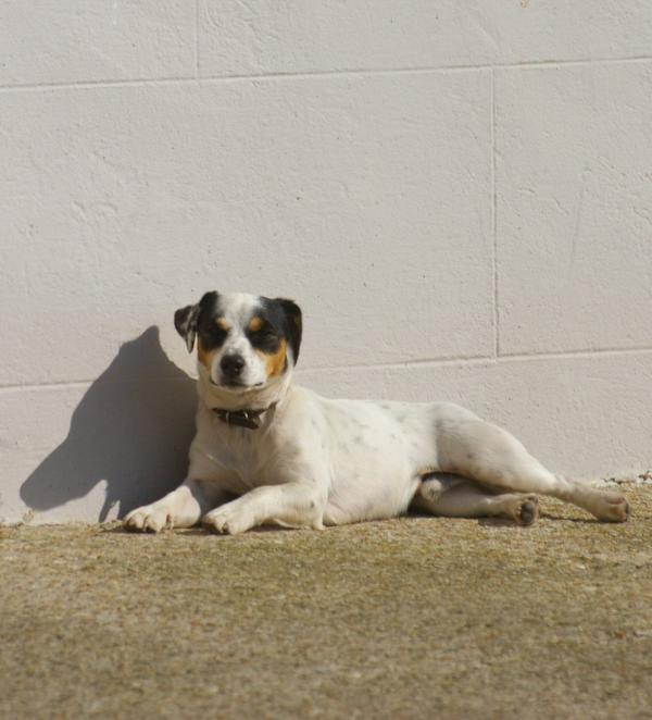 Le chien et son ombre