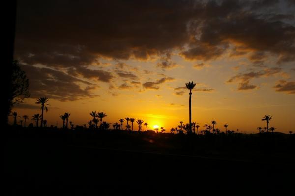 Coucher de soleil sur la palmeraie
