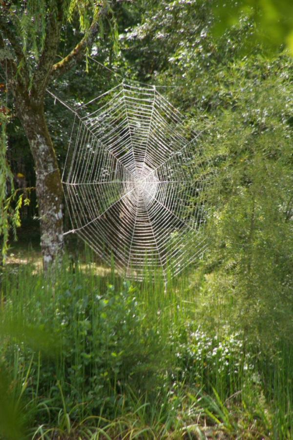 Toile d'araignée géante