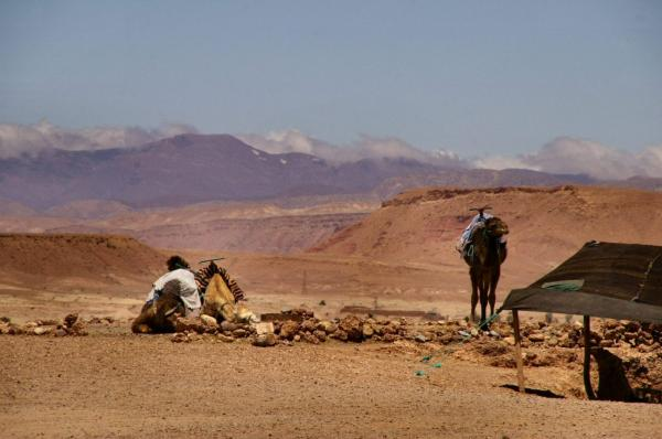 Dromadaires dans le Moyen Atlas