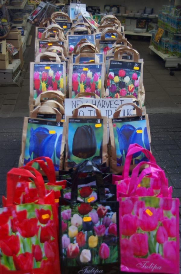 Tulipes à vendre