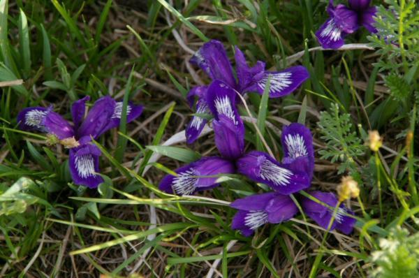 Flore dans la steppe mongole
