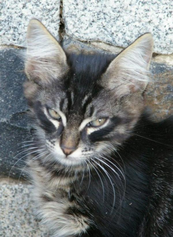 Le petit chat Mahmoud ?