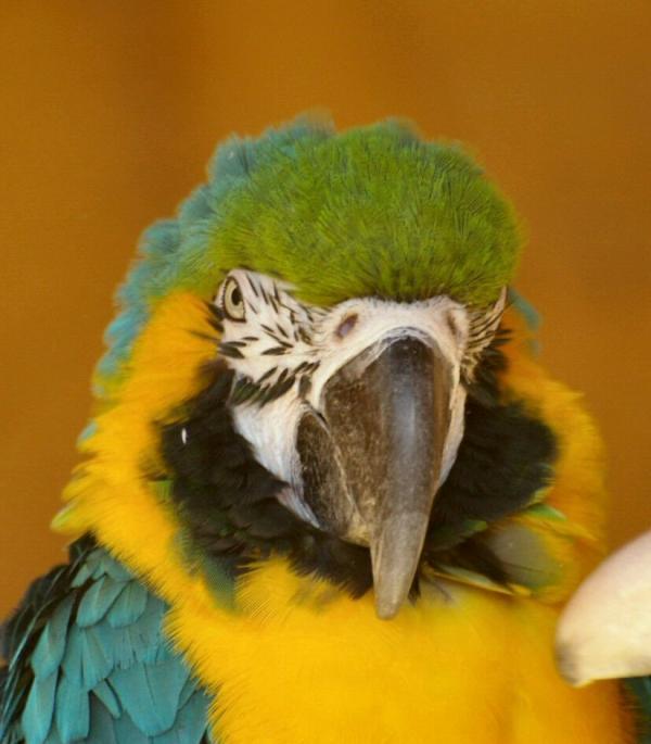 Perroquet (2)