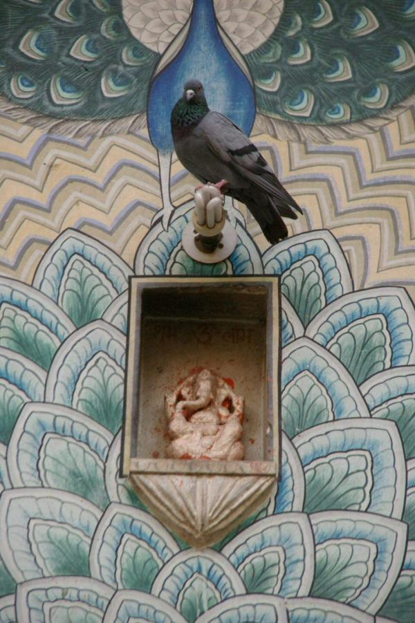 Ganesh et le pigeon