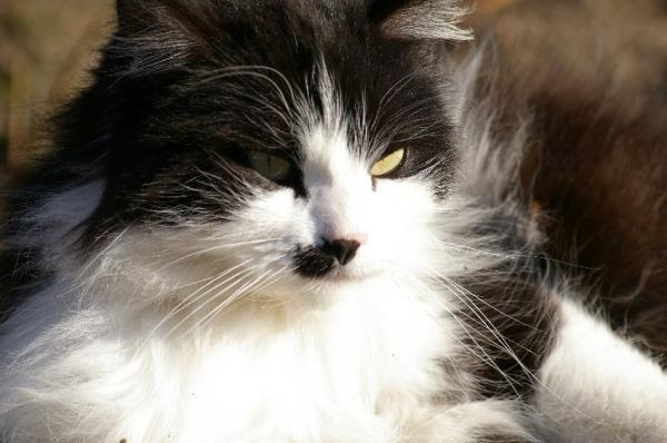 Le chat songeur
