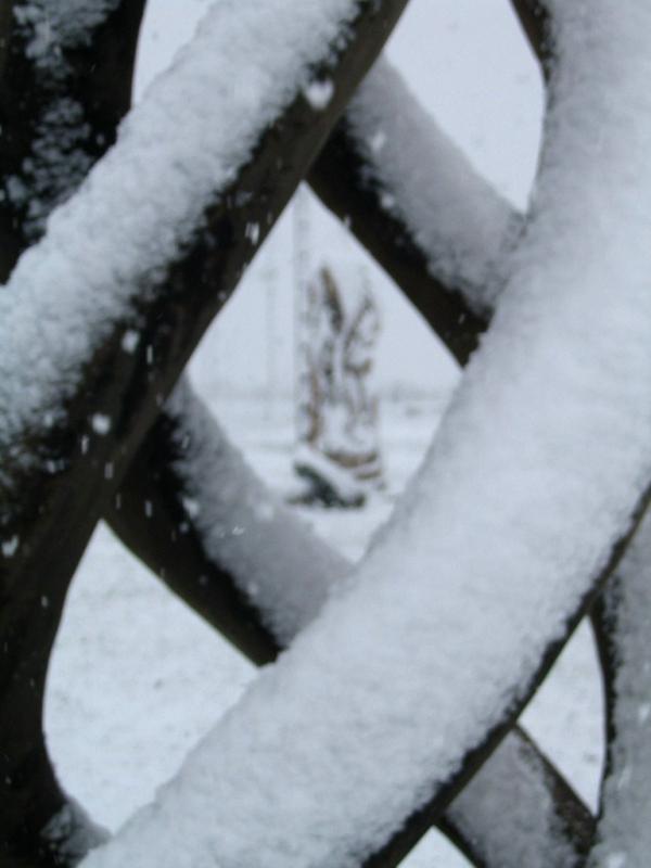 Sous la neige (4)