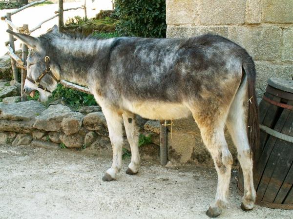 L'âne (4)