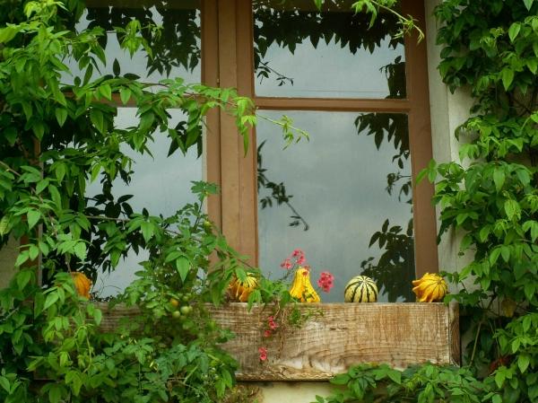 Fenêtre de saison (1)