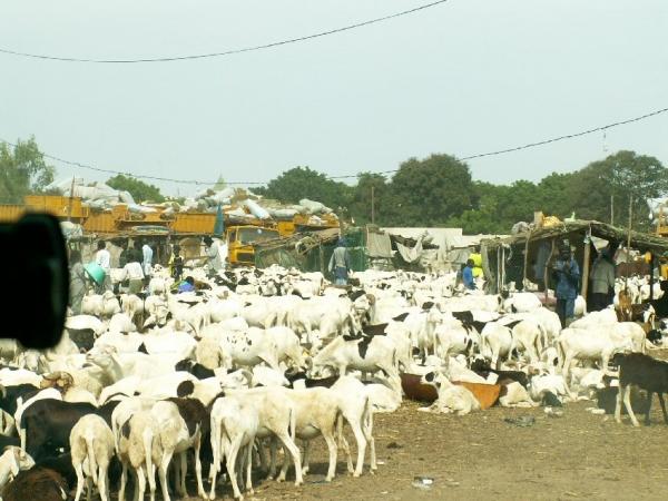 Entre Dakar et Saint-Louis (3)