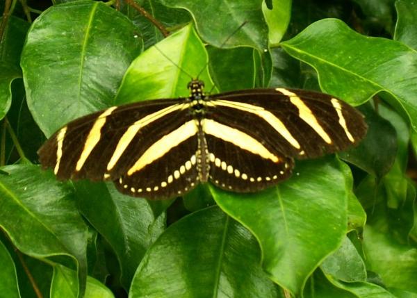 Jolis papillons (3)