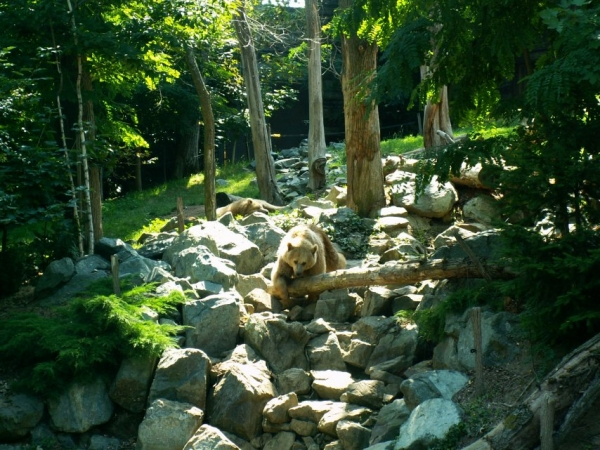 L'ours (1)