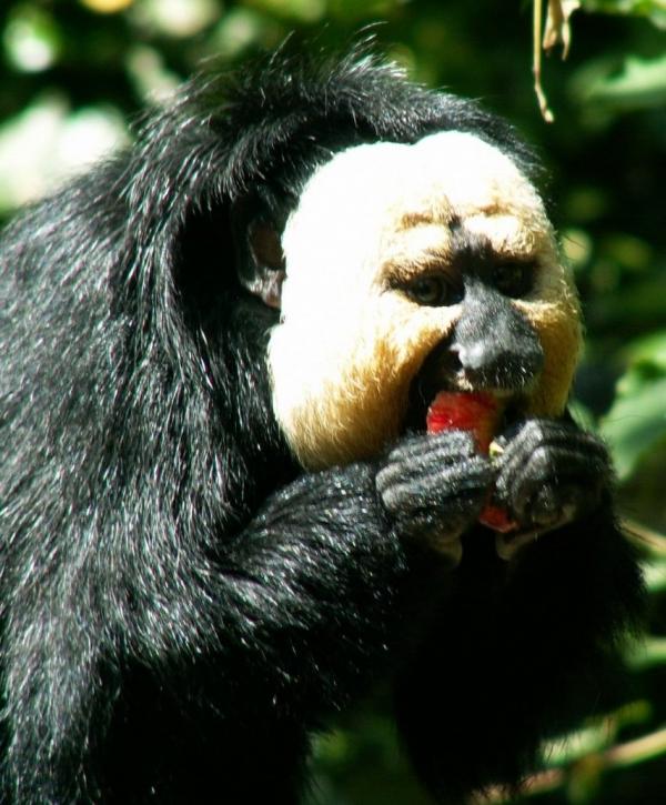 La vallée des singes (7)
