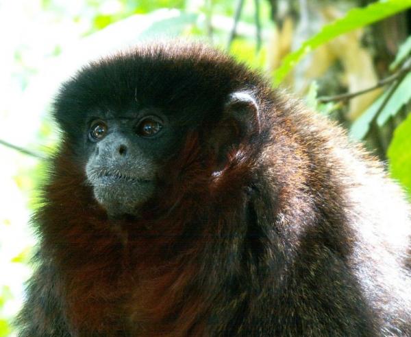 La vallée des singes (9)