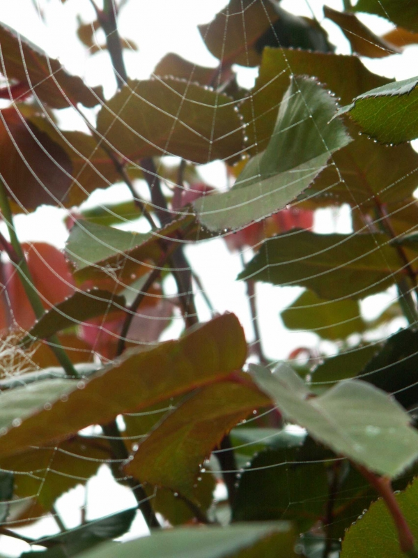 La toile de l'araignée