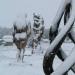 Sous la neige (3)