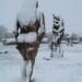Sous la neige (5)