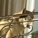 Chien au balcon