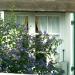 Fenêtres fleuries (3)