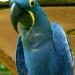 Perroquets (2)