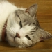 Mon chat Théo (1)