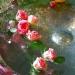 Le bain des belles