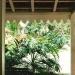 Le jardin de Balata (1)