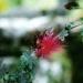 Le jardin de Balata (4)