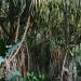 Le jardin de Balata (5)