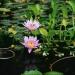 Le jardin de Balata (6)