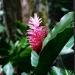 Le jardin de Balata (8)