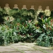 Le jardin de Balata (3)
