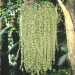 Le jardin de Balata (11)