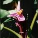 Le jardin de Balata (13)