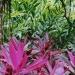 Le jardin de Balata (15)