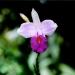 Le jardin de Balata (16)