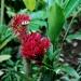 Le jardin de Balata (18)