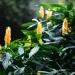 Le jardin de Balata (17)