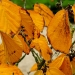 Couleurs d'automne (4)