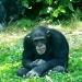 La vallée des singes  (2)