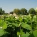Parc floral de la Court d'Aron (10)