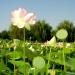 Parc floral de la Court d'Aron (11)
