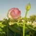 Parc floral de la Court d'Aron (12)