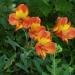 Parc floral de la Court d'Aron (2)
