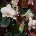 Parc floral de la Court d'Aron (3)